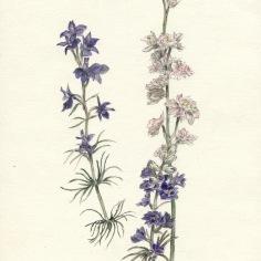 zoom-fleurs-champetres-donne-par-s-2011-aout-sans-cadre