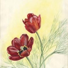 zoom-tulipes